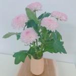 花の写真0