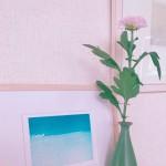 花の写真5